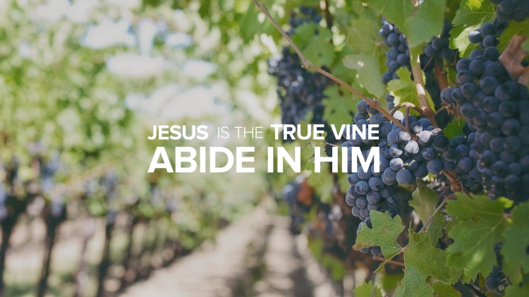 CCF_IMG_161113_Jesus-is-the-True-Vine-2560x1440-1